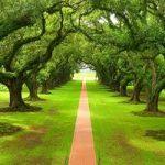 بزرگ ترین درخت دنیا که خود یک جنگل است