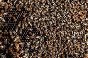 حمله زنبورهای عسل به یک ساختمان مسکونی در تهران