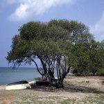 تصویر عجیبی از یک درخت خامه !