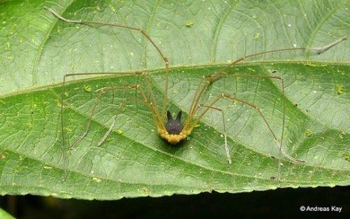 عجیب ترین عنکبوت
