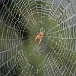 تصویری از عجیب ترین عنکبوت دنیا با سری شبیه سگ