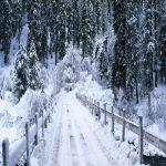 بارش برف سیاه در روسیه +عکس