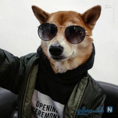 سگ مدلینگ با پوشین لباس های مردانه معروف شد!
