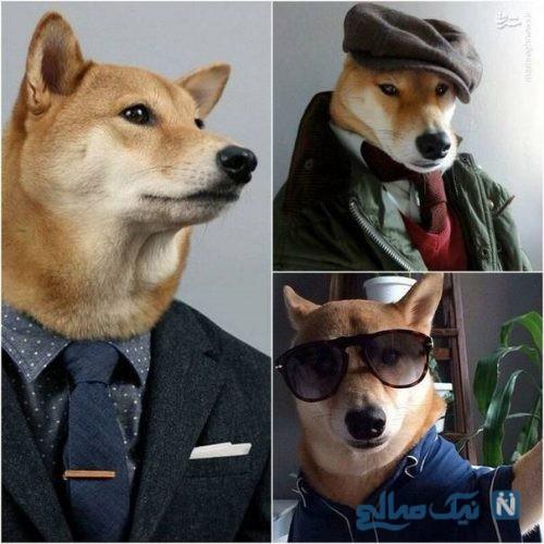 سگ مدلینگ