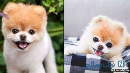 بامزه ترین سگ جهان