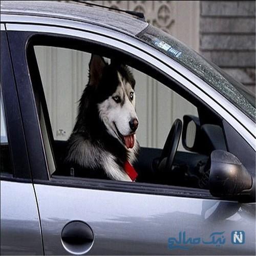 مجازات سگ گردانی در اماکن عمومی