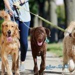 ممنوعیت سگ گردانی و اعتراضات در اینستاگرام + تصاویر