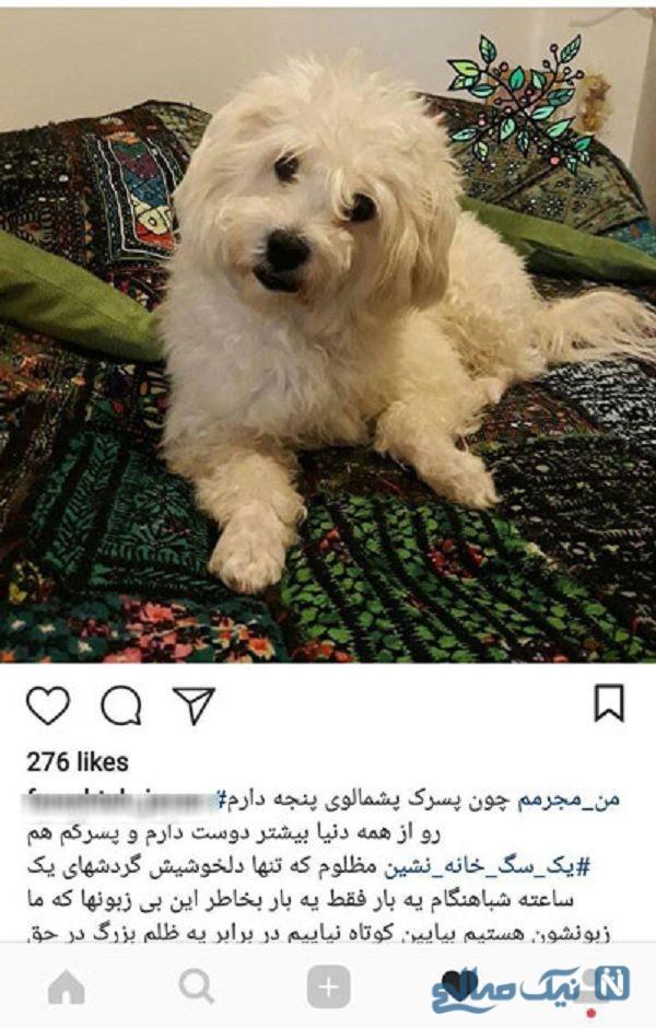ممنوعیت سگ گردانی