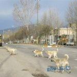 حمله سگ های ولگرد در لواسان به یک خانم