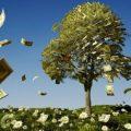 هدف از ساخت درخت پول در کشور ونزوئلا