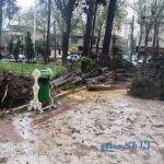 خسارت طوفان و باران شدید در استان گلستان