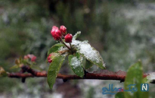 تصاویری زیبا از بارش برف بهاری در آذربایجان غربی