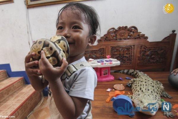 تمساح و مار پیتون همبازی یک دختر سه ساله شده اند!