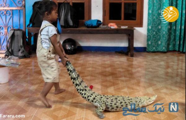 تمساح و مار پیتون