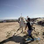 تصاویری دیدنی از جشنواره اسب سواری در استان فارس