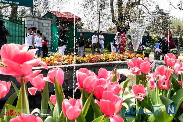 جشنواره گل های لاله
