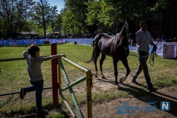 حراج اسب