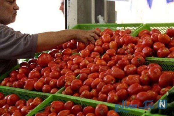 قیمت گوجه فرنگی باورکردنی نیست!
