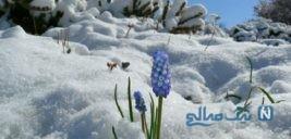 بارش برف بهاری در کلرادوی آمریکا + تصاویر