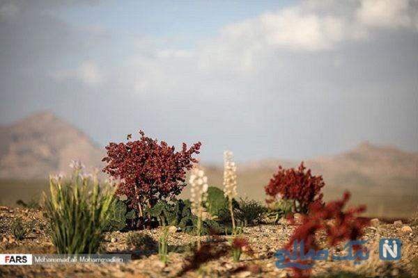 دشت ریواس در شهر بابک