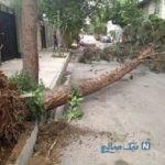 سقوط درخت روی خودرو بر اثر وزش باد شدید در تهران +عکس
