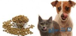 ممنوع شدن واردات غذای سگ و گربه به کشور + جزئیات