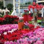 تصاویری زیبا از نمایشگاه گل و گیاه در تهران