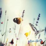 هجوم پروانهها به شهر یزد