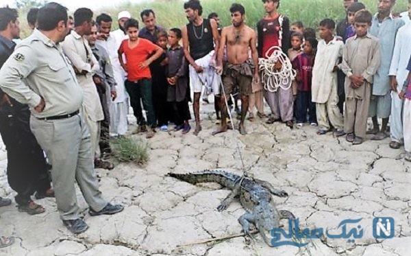 حمله تمساح به دختر