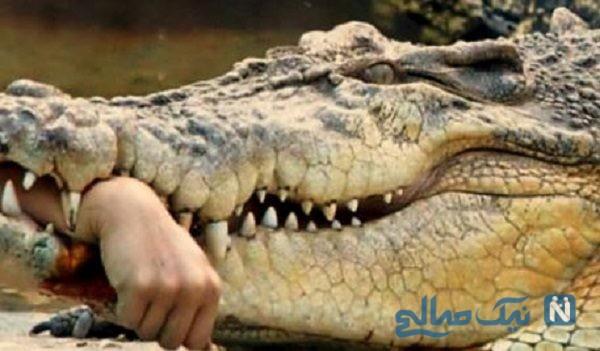 روایت حادثه حمله تمساح به دختر ۱۰ ساله از زبان معلمش