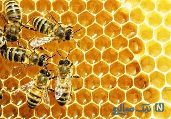 فیلمی عجیب از حمله هزاران زنبورعسل به خودروی یک مرد