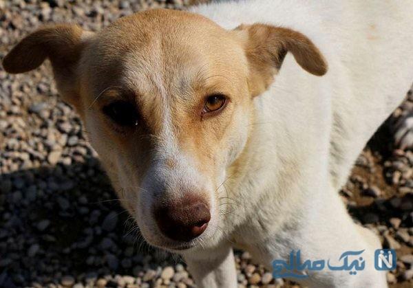 سگ ولگرد برای درمان زخم هایش به داروخانه رفت!