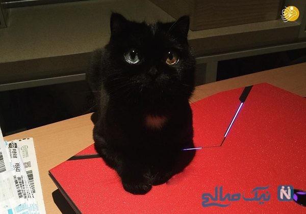 رنگ چشمان این گربه همه را شگفت زده می کند!