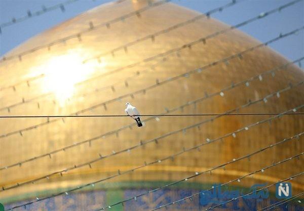 تصاویری زیبا از شست و شوی گنبد امام رضا (ع)