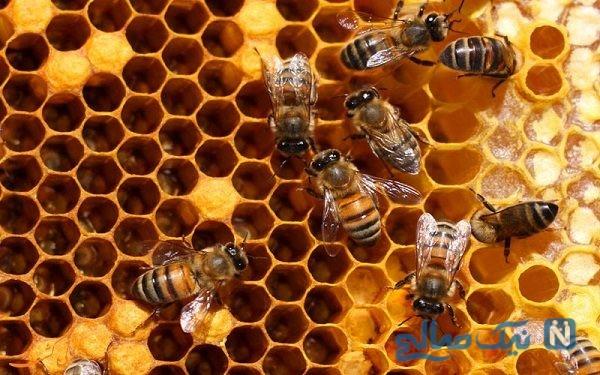 فیلمی جالب از روند تشکیل کندوی عسل