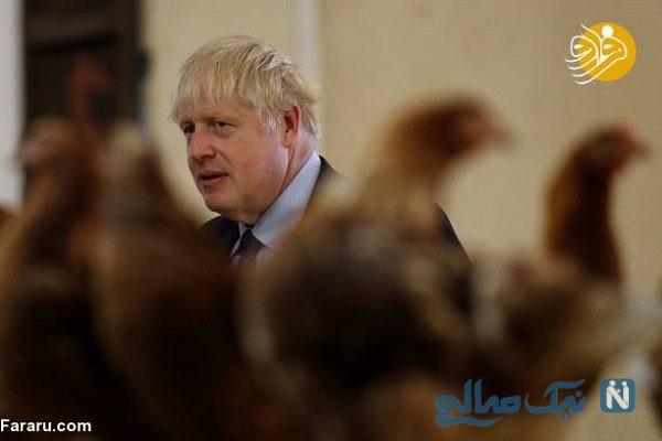 نخست وزیر جدید انگلیس در مرغداری
