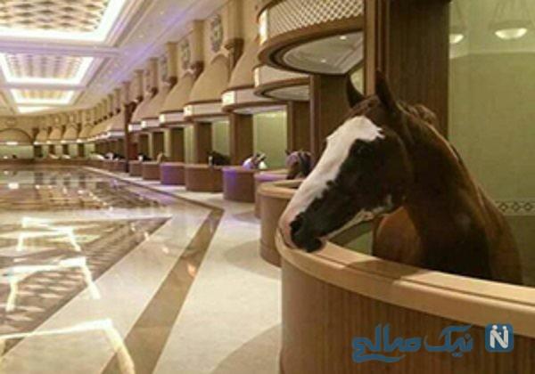 پرورش و نگهداری اسب