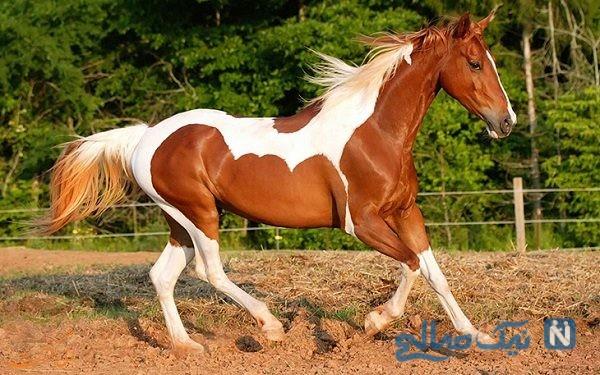 طویله های لاکچری برای پرورش و نگهداری اسب ها