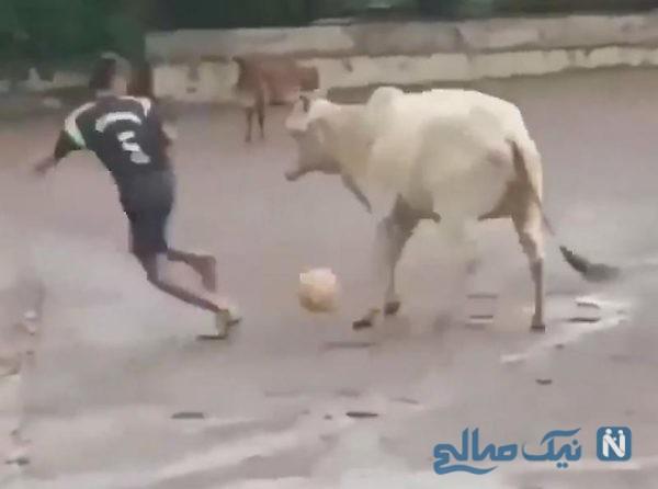 گاو فوتبالیست
