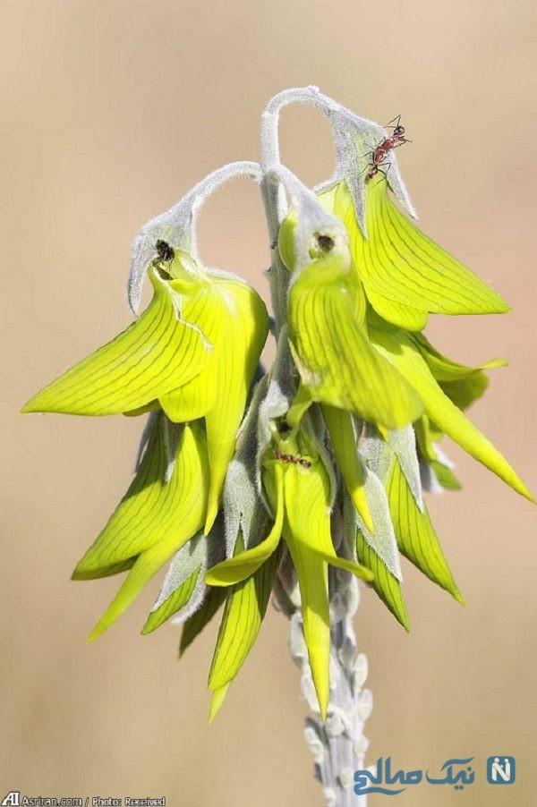 گیاهی شبیه پرنده