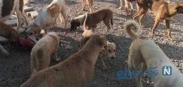 آزار و اذیت سگ ها در تهران و ورود پلیس به این موضوع