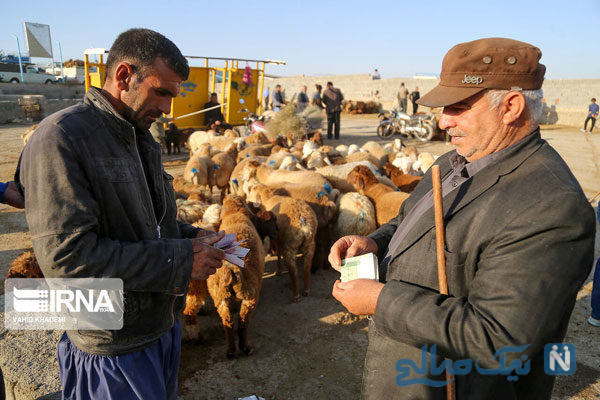 بازار خرید و فروش دام در آستانه عید قربان