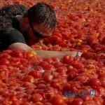 جشنواره در روسیه و از بین بردن ۲۰ تن گوجه در این جشن
