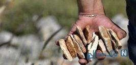 پرتاب سنگ در یک جشنواره ۱۰۰ ها زخمی برجای گذاشت!