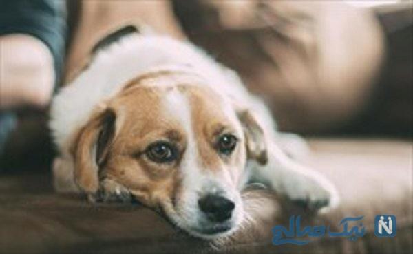 دفن حیوان سگ در مسجدی در رشت جنجالی شد!