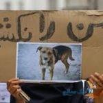 سگ کشی در تهران و تجمع مقابل شهرداری