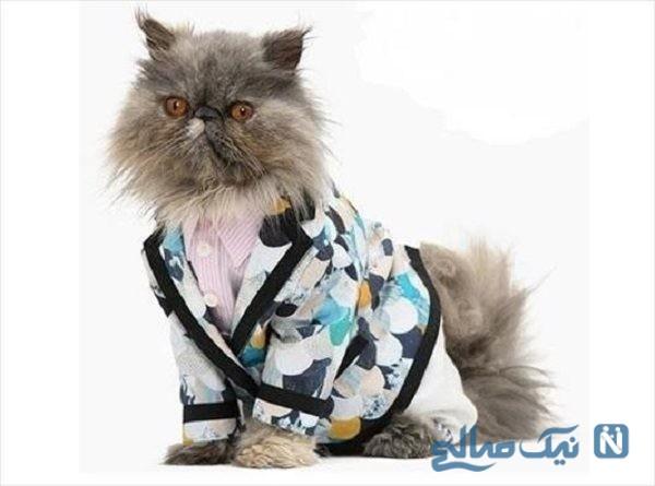 شوی لباس گربه ها با حضور علاقه مندان به حیوانات
