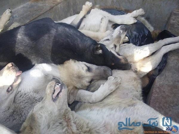 کشتار سگ ها با اسید