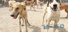 کشتار سگ ها با اسید و سم در تهران خبرساز شد!