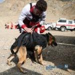 سگ های زنده یاب به دنبال دختر گمشده در جنوب تهران